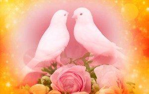 白い小鳥1-300x189