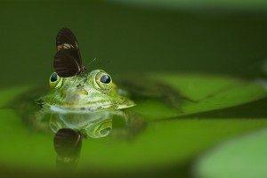 frog-540812_1280-300x200